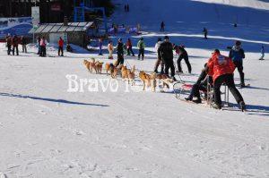 pamporovo zimovanje, pamporovo zimovanje aranzmani, zimovanje bugarska, zimovanje bugarska aranzmani, skijanje bugarska, organizovano skijanje bugarska, pamporovo utisci, pamporovo, pamporovo bravo tours